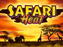 Аппарат Safari Heat