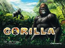 Онлайн автомат Gorilla