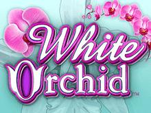 Красивый игровой слот White Orchid